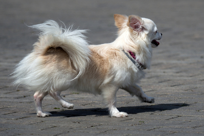Собака спасла украинца от самоубийства