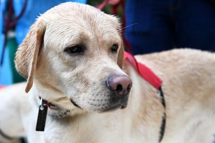 Собаки по запаху определили рак у женщин