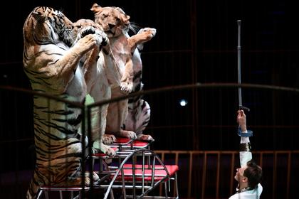 Стало известно отношение россиян к цирковым номерам с животными