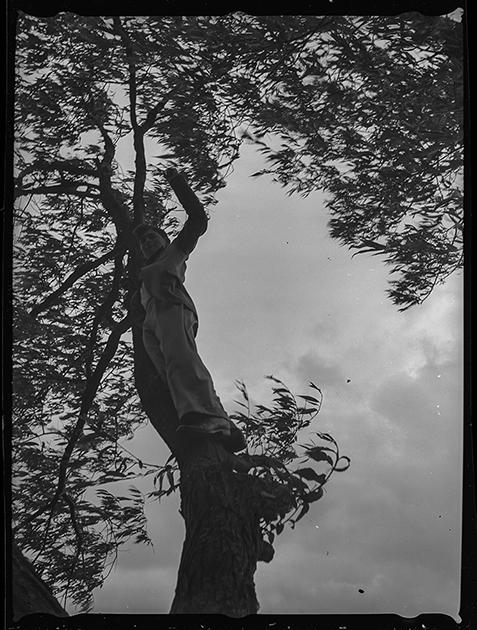 Автопортрет фотографа на дереве. Англия, 1939 год