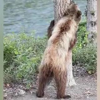Скачать медведи и марихуана видео витамин а в марихуане