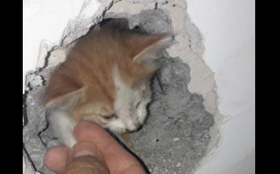 Российские спасатели пробили стену ради вызволения котенка