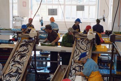 Япония озаботилась заработавшим рыбзаводом на Курилах