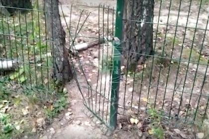 Появилось видео с места нападения на Памфилову