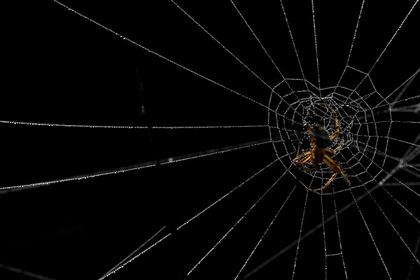 Водитель испугался паука и убил человека