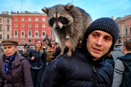 Москвичам посоветовали обеспечить жильем енотов