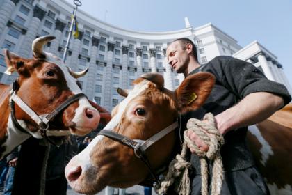 В партии Порошенко предложили отдать деньги студентов коровам