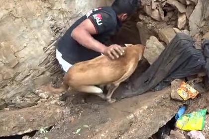 Собака унюхала щенят под землей и спасла их от мучительной смерти