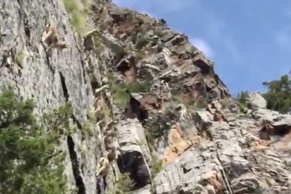 Скачущие по скалам бараны заставили пользователей сети усомниться в гравитации