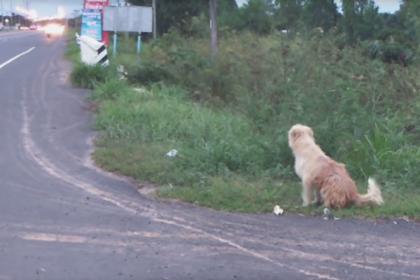 Потерявшаяся собака годами ждала у обочины своего хозяина и дождалась