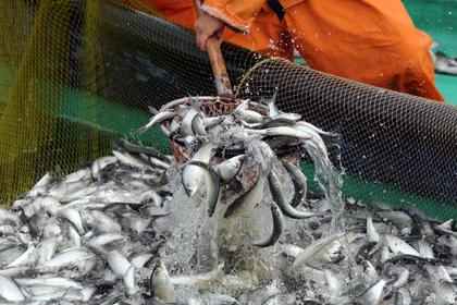 Изменение квот на вылов рыбы в России отложили