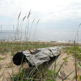 Берег Онежского залива