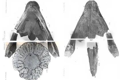 Российские ученые обнаружили останки древних амфибий в необычном месте