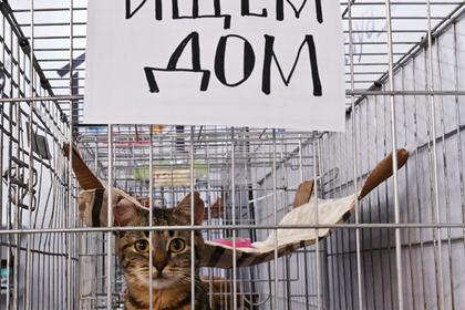 В России решили запретить умерщвление бездомных животных