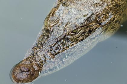 Находчивость помогла рыболову в зубах крокодила