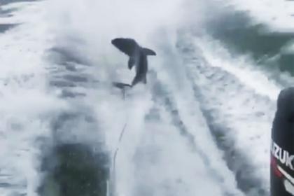 Мужчина поиздевался над акулой и сел в тюрьму