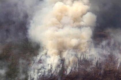 В российском регионе лесные пожары перестали тушить ради экономии