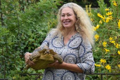 Сбежавшая черепаха проползла несколько кварталов за 15 месяцев