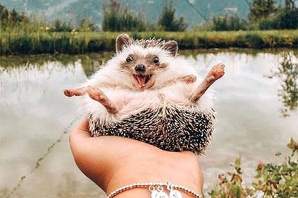 «Самый счастливый в мире еж» стал звездой сети