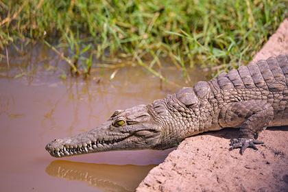 Рыбак сумел вырвать свою голову из пасти крокодила