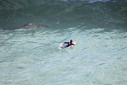 Мужчина увидел с неба акулу и спас жизнь серфера