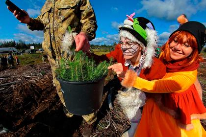 В России стартовала кампания по восстановлению лесов