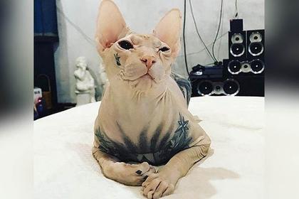 За лысого кота с тюремными татуировками заплатят полмиллиона рублей