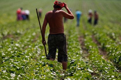Киев назвал дату начала распродажи Украины