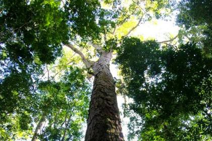 Обнаружено загадочное явление в Амазонии