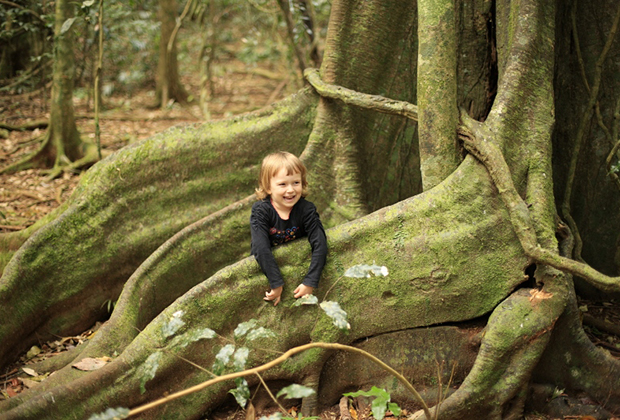 Деревья в субтропическом лесу такие огромные, что напоминают ноги динозавра. На их фоне ты выглядишь не то что муравьем — песчинкой даже.