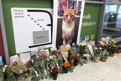 На похороны важного кота пришли сотни кошек, собак, хорьков и ослик