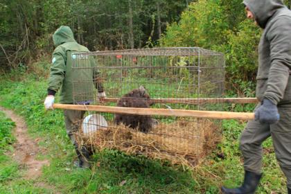 Медвежонка-сироту спасли из заброшенного дома в Мурманске