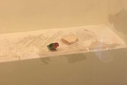 Попугая посадили в тюрьму после кражи из магазина