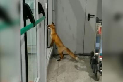 Дикое животное ворвалось в московский аэропорт