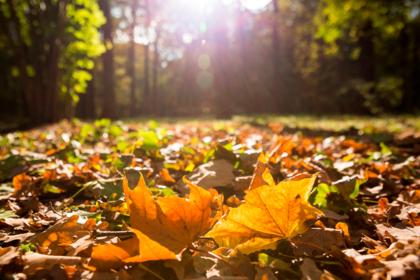 Назван последний теплый день осени в Москве