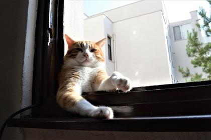 Голая украинка захотела спасти кота и выпала из квартиры