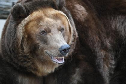 Медведь убил бывшего российского депутата