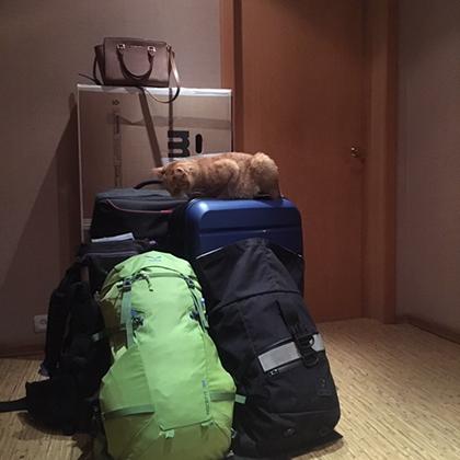 Переезд в Африку. 45 килограммов на двоих. Нет, котика с собой не взяли.