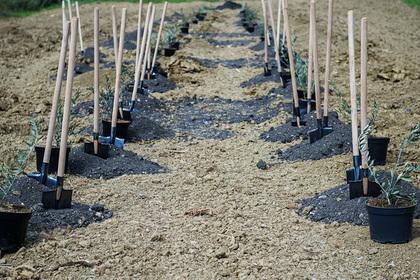 Почти 70 тысяч деревьев высадили за день в российском регионе