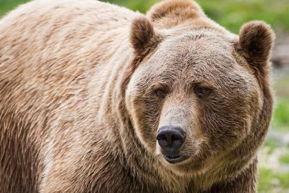 Отец отпугнул медведя выстрелом и спас сына