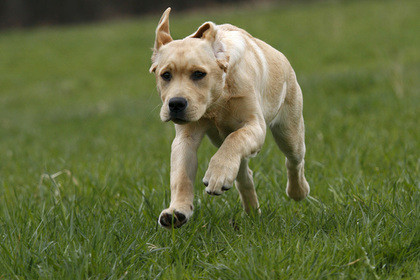 Собака выстрелила из пистолета в попутчицу хозяина