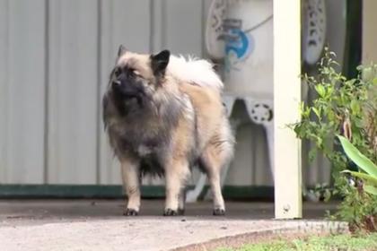 Пес Гуччи спас хозяина от мучительной смерти