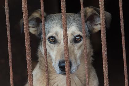 Материалы об издевательствах над животными смогут блокировать без суда