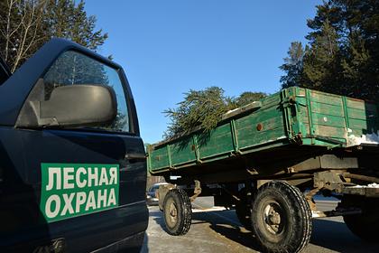 Россиянин получил условный срок за вырубку леса