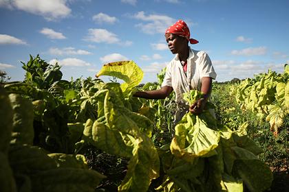 Российские компании нарастят поставки удобрений в Африку