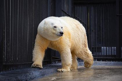 Спасенной в Норильске медведице выбрали имя
