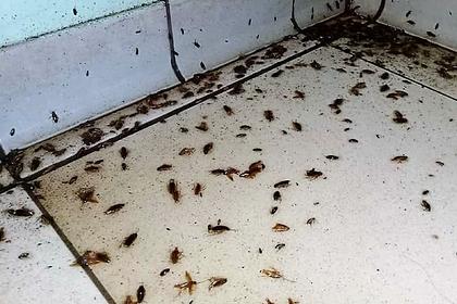 Тараканы захватили многоквартирный дом под Москвой