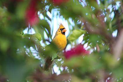 Птицу с редчайшим окрасом сняли на камеру