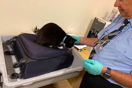 Кот спрятался в чемодане путешественников и ошарашил сотрудников аэропорта