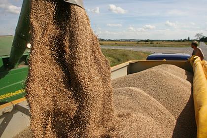 Россия обсудит с Вьетнамом поставки пшеницы